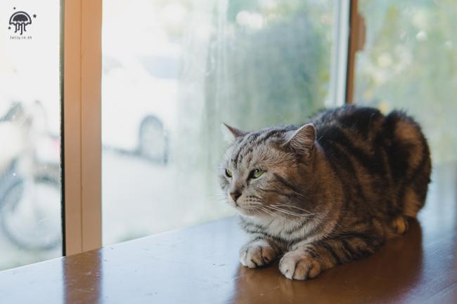 คาเฟ่ แมว