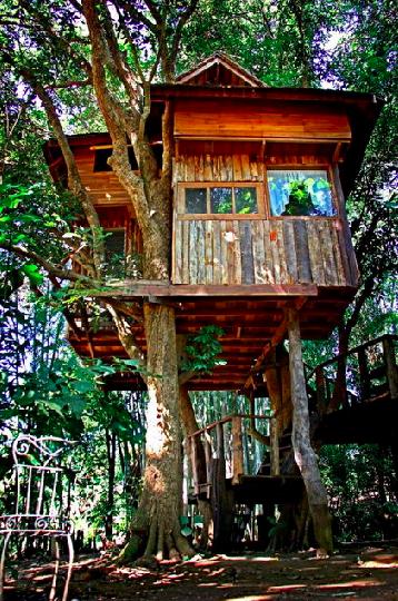 ที่พักบ้านต้นไม้